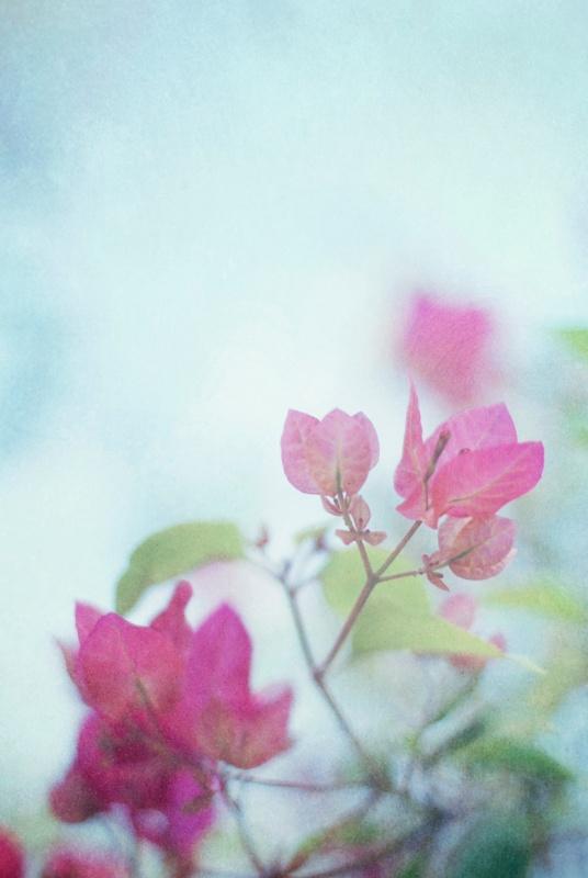 bougie pink flat blog