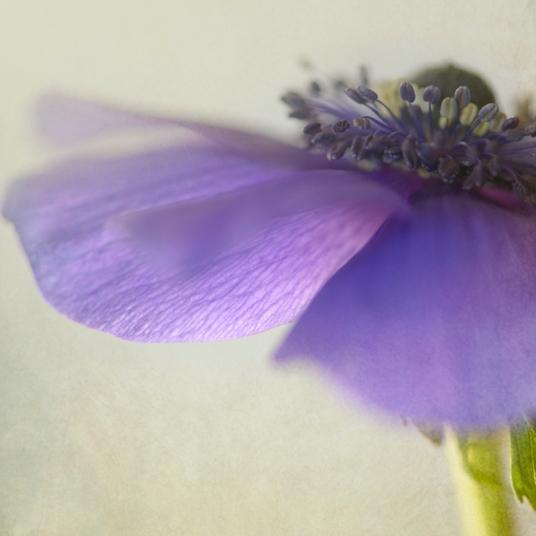 purple 3 squareblog