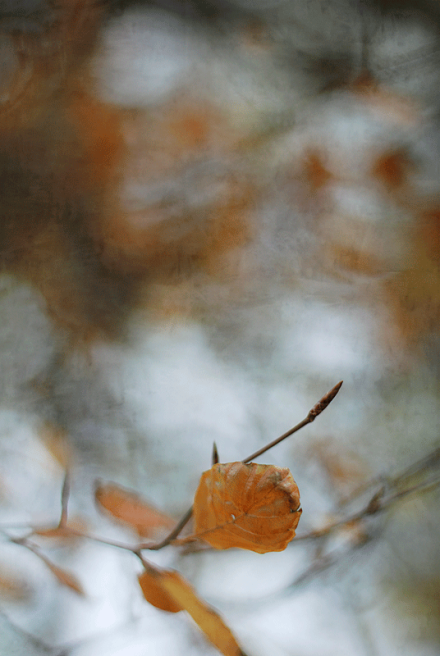 yellow-up-2blog