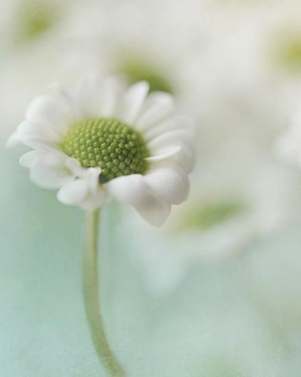 daisyblog