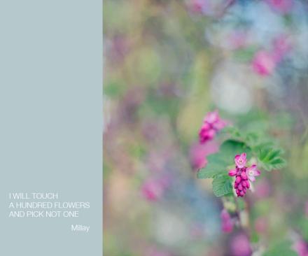 haiku pink flower
