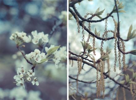 Gentle Spring for Blog