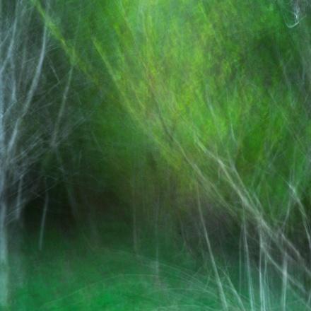 through the trees blog FB