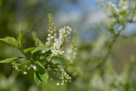 blossom blog FB