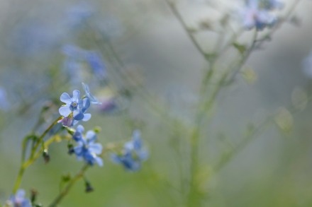 forget me not blog FB