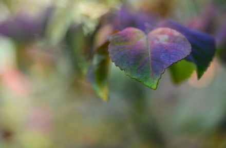 hear leaf intense