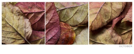 Autumn-Leaves-Concept