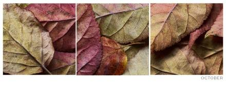 Autumn-Leaves-Concept
