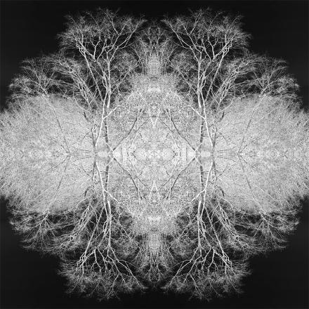 Circle of Trees Small FB